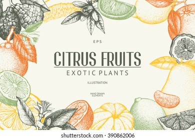 Vintage template. Ink hand drawn design with citrus fruits in pastel colors. Vector illustration with highly detailed citrus fruits sketch