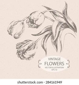 Vintage Tulips, Hand drawn vector Illustration