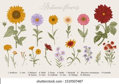 Vintage vector botanical illustration. Set. Autumn flowers. Colorful