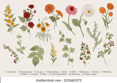 Vintage vector botanical illustration. Set. Autumn flowers and twigs. Colorful