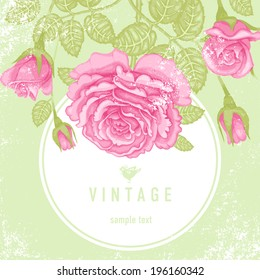 Vintage vector card with beautiful pink garden roses on a green background. Victorian style.
