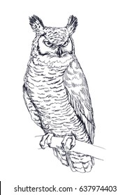 Vintage vector hand drawn night owl sitting on branch. Graphic illustration of wild bird isolated on white for print on t-shirt, cards or poster
