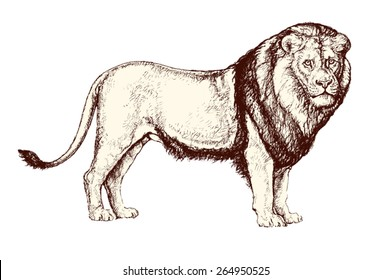 Vintage vector illustration: drawing of a standing lion