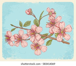 Vintage vector illustration flowers of the cherry blossoms. Vintage postcard with sakura.