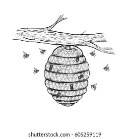 Vintage vector sketch of beehive. Honey set. Hand drawn branch with bees. Retro isolated sketches. Doodle linear graphic design. Black and white design. Vector illustration.