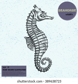 Vintage vector sketch of seahorse. Hand drawn illustration in line art style. Engraved tattoo sketch. Sealife collection