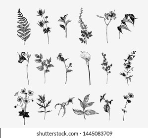 Vintage wild flower illustration set. Isolated black and white botanical herbs and flowers hand drawn graphic. Fern, Lily, Calla, Anemone, Salal, Wisteria, Delphinium