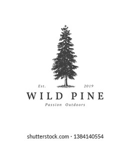 Vintage wild pine design logo vector, Evergreen logo design inspiration - vector