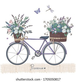 Violet bicycle with lavender flowers bouquet in basket. Retro bicycle with flower boxes. Provence style, France, Europe. Vintage vector illustration. Isolated objects on white background.