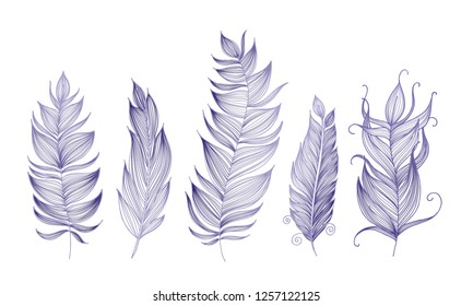 violet fancy feathers. doodle inking, thin lines. decorative elements
