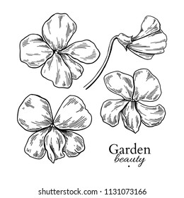 Violet flower drawing. Vector hand drawn engraved floral set. Viola black ink sketch. Wild botanical garden bloom.  Great for tea packaging, label, icon, greeting cards, decor