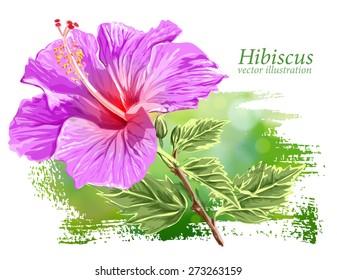 Violet Flower Hibiscus on green background - vector illustration / Eps10