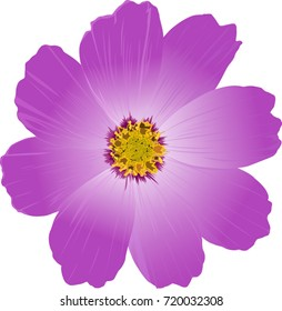 Violet flower. Vector illustration. Cosmos.