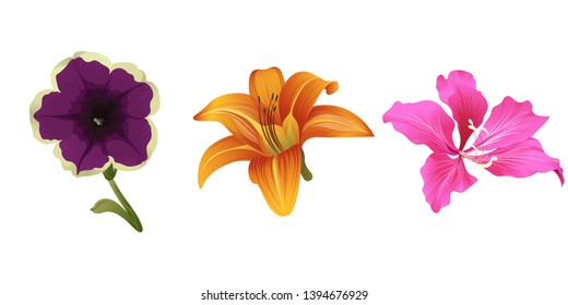 Violet petunia. Orange Daylily. Pink Bauhinia Purpurea. Vector illustration. Floral botanical flower. Wild leaf wildflower isolated. Exotic tropical hawaiian jungle. Isolated illustration element.