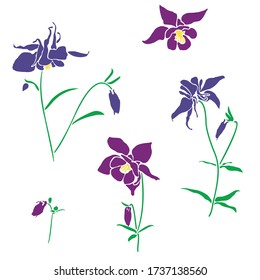 Violet and pink flower of aquilegia, columbine illustration in flat style, isolated on white background. Can be used for summer design, pattern, greeting card, wedding invite, cosmetic template.