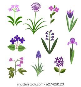 Violet vector flowers decorative set