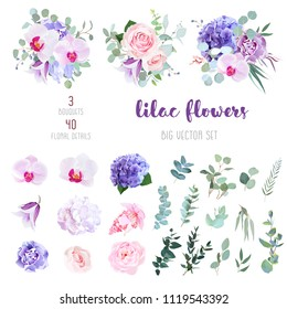 Violet and white hydrangea, pink rose and ranunculus, purple carnation, lilac orchid, iris, medinilla, bell flowers, eucalyptus, and mix of greenery big vector collection. All elements are isolated.