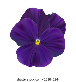 Violet-blue pansy flower
