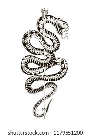 Viper snake with arrow. Hand drawn vector illustration. Graphic sketch for tattoo, poster, clothes, t-shirt design, pins, stickers and coloring book