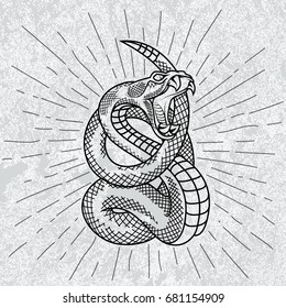 Viper snake. Hand drawn illustration in outline technique with star rays and grunge background.