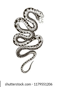 Viper snake. Hand drawn vector illustration. Graphic sketch for tattoo, poster, clothes, t-shirt design, pins, stickers and coloring book