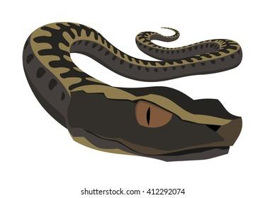 Viper snake vector