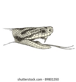 "Viper - vintage engraved illustration - ""Cent récits d'histoire naturelle"" by C.Delon published in 1889 France"