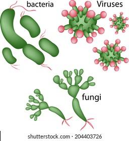 Viruses, bacteria, fungi vector.