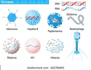 Viruses. diagram showing shapes of virions: bacteriophage, ebolavirus, hepatitis, rotavirus, adenovirus, papillomavirus, AIDS and influenza. Medical Infographic set