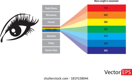 Visible light diagram. Color electromagnetic spectrum, light wave frequency. Vector.