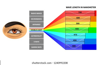 Visible light spectrum. Color waves length perceived by human eye. Rainbow electromagnetic waves. Educational school physics diagram