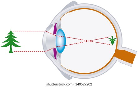 vision, optics, eyeball, visual system