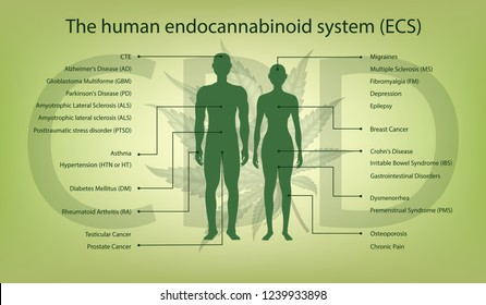 Visual drawing of benefits effective or properties the human endocannabinoid system for marijuana (CBD) on green background for vector illustration