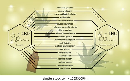 Visual drawing of difference CBD and THC benefits effective or properties to human body concept healthcare on green background for vector illustration