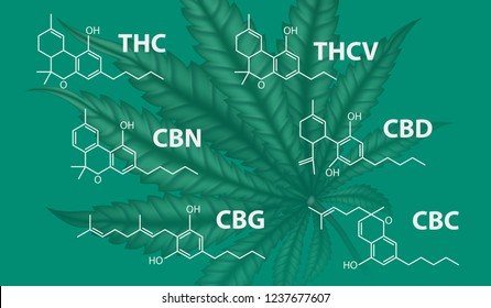 Visual drawing of difference formula molecular chemistry structure of marijuana for CBD, THC, CBN, CBG, THCV and CBC on green background for vector illustration