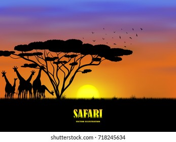 Visual drawing silhouette of beautiful giraffe family in safari with wild and sunset background for vector illustration,travel concept