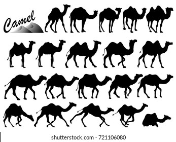 Visual drawing silhouettes of camel animal wildlife collection in the desert or zoo with black and white vector illustration