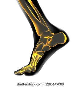 Visualization of bones of foot. Anatomy of joints, human leg realistic black and yellow transparente skeleton. Medial view. For advertising or medical orthopedic web sites. Vector illustration