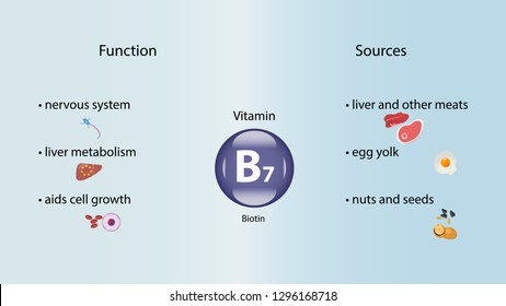 Vitamin B7 vector design. Vitamin B7 function and sources. Biotin