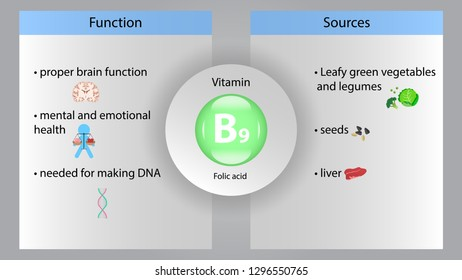 Vitamin B9 vector design. Vitamin B9 function and sources. Folic acid