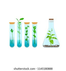 In vitro plant tissue culture. Plants in test tubes. Vector illustration on white background