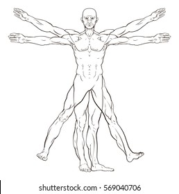 Vitruvian man style human figure like Leonard Da Vinci s  anatomy illustration