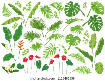 Vivid tropical flowers and green leaves isolated on white background. Tropic plant big set.  Vector flat illustration.