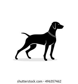 Vizsla dog - vector illustration