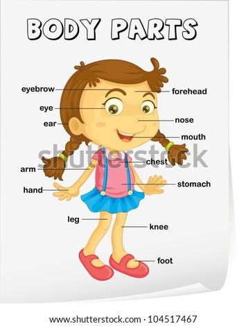 vocabulary worksheet parts body のベクター画像素材 ロイヤリティ