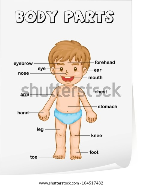 Vocabulary Worksheet Parts Body Stock Vector (Royalty Free ...