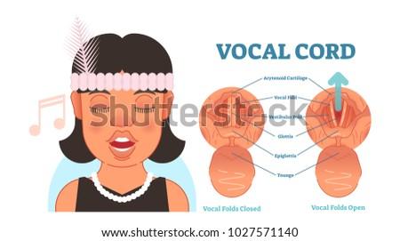 Vocal Cord Anatomy Vector Illustration Diagram Stock Vector Royalty