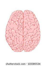 Volumetric pink brain is a top view
