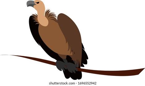 Vulture bird, illustration, vector on white background