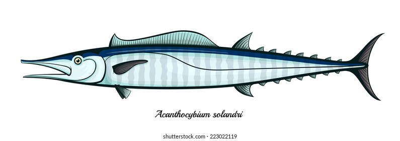 wahoo fish isolated vector illustration